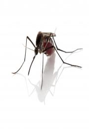 Birigui adere à Semana Estadual de Mobilização Social contra o Aedes aegypti